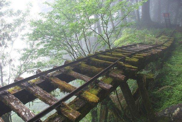 Заброшенный железнодорожный мост на Тайване